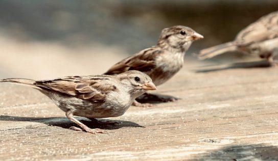 Ako sa zbaviť otravných vtákov vokolí vášho domu